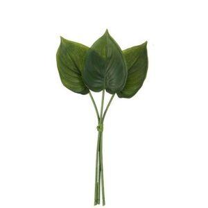 3 okrasné listy Philodendron I - 30cm